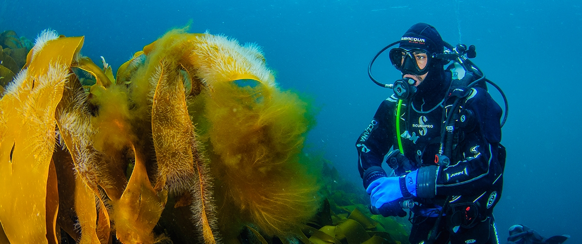 Diver and dead man's fingers