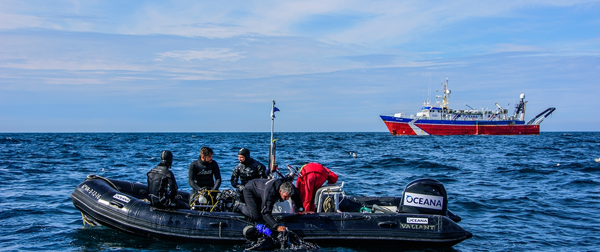 Divers preparing to document marine life in the North Sea